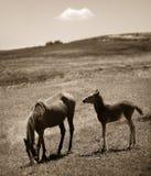 Pferde in der Natur Stockbilder