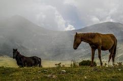 Pferde in der Natur Stockbild