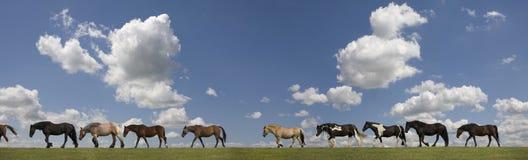 Pferde in der Reihe Lizenzfreies Stockfoto