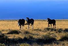 Pferde in der Steppe Lizenzfreie Stockfotos