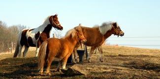 Pferde an der tschechischen Landschaft Stockfoto