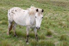 Pferde in der Weide Stockbild