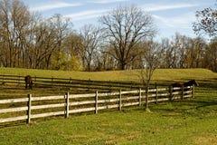 Pferde in der Weide Lizenzfreies Stockbild