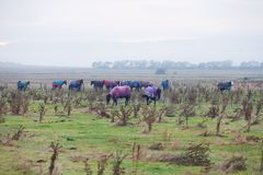 Pferde in der Weide Lizenzfreies Stockfoto