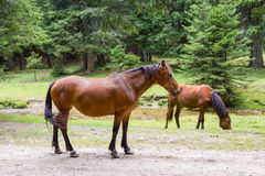 Pferde an der Weide Stockbild