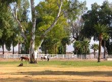 Pferde an der Weide Stockfotos