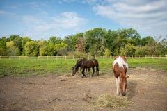 Pferde in der Weide mit hellem blauem Himmel Lizenzfreie Stockfotos
