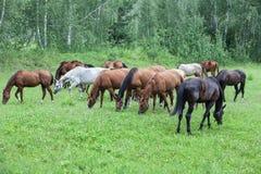 Pferde an der Wiese lizenzfreies stockbild