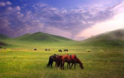 Pferde in der Wiese Stockbilder