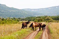 Pferde in der Wiese Lizenzfreies Stockbild