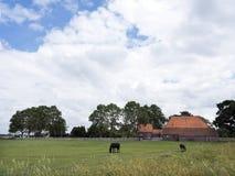 Pferde in der Wiese vor altem Bauernhof herein südöstlich der niederländischen Provinz Stockfotos