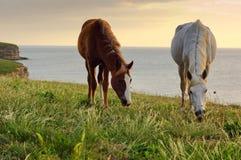 Pferde, die auf der Wiese weiden lassen Stockfoto