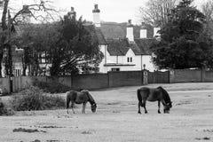 Pferde, die auf einem Feld nahe bei einem Haus weiden lassen Stockfotografie
