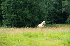 Pferde, die auf einem Gebiet nahe dem Wald weiden lassen Lizenzfreies Stockfoto