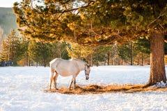 Pferde, die auf einem Gebiet weiden lassen Stockfotografie