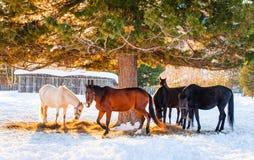 Pferde, die auf einem Gebiet weiden lassen Stockbild