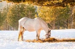 Pferde, die auf einem Gebiet weiden lassen Lizenzfreies Stockfoto