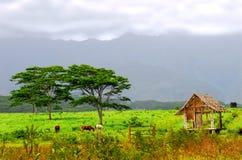 Pferde, die auf einer Ranch in Kauai Hawaii speisen lizenzfreie stockfotografie