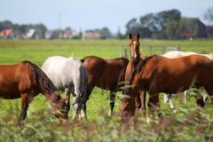 Pferde, die auf einer Weide weiden lassen Lizenzfreies Stockbild