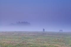 Pferde, die auf Weide im dichten Nebel weiden lassen Lizenzfreie Stockfotos