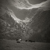 Pferde, die in den Bergen weiden lassen Lizenzfreies Stockbild