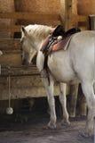 Pferde, die an der Abflussrinne speisen Stockfotografie