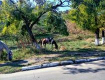 Pferde, die in der Natur weiden lassen Stockfoto
