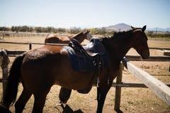 Pferde, die in der Ranch stehen lizenzfreie stockfotos