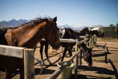 Pferde, die in der Ranch stehen stockbilder