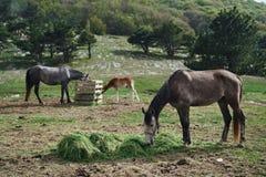 Pferde, die in der Wiese im Berg, Natur, Schönheit, Bäume weiden lassen Stockbild