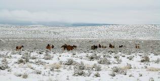 Pferde, die an einem Wintertag weiden lassen stockfoto