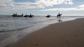 Pferde, die Fluss kreuzen Stockfotografie