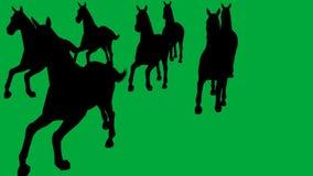 Pferde, die - getrennt auf grünem Schirm galoppieren lizenzfreie abbildung