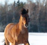 Pferde, die Kamera untersuchen Stockfotos