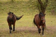 Pferde, die Kamera untersuchen stockbild