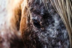Pferde, die Kamera untersuchen stockfoto