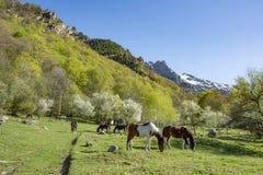 Pferde, die ruhig in einer Weide auf einem Bauernhof weiden lassen lizenzfreies stockbild