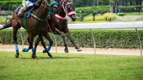 Pferde, die vorüber auf der Rennbahn laufen Lizenzfreie Stockfotos