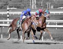Pferde, die zur Ziellinie fahren stockfotos