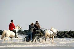 Pferde durch das Meer Stockfoto