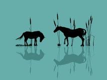 Pferde durch das Wasser Stockfotos