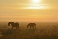 Pferde durch ein nebeliges Feld Lizenzfreies Stockbild