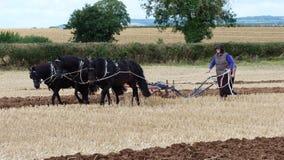 Pferde an einem Arbeitstag-Land-Zeigung in England Stockfotografie