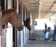Pferde in einem Stall Lizenzfreies Stockfoto