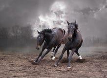 Pferde einer Dämmerung Stockfotos