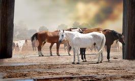 Pferde in einer Herde Stockfotos