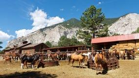 Pferde an der Ranch stockbilder