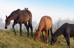 Pferde in einer Reihe Stockbilder
