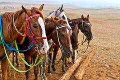 Pferde in einer Wüste lizenzfreies stockbild