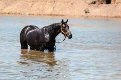 Pferde an einer Wasserentnahmestelle Stockfoto